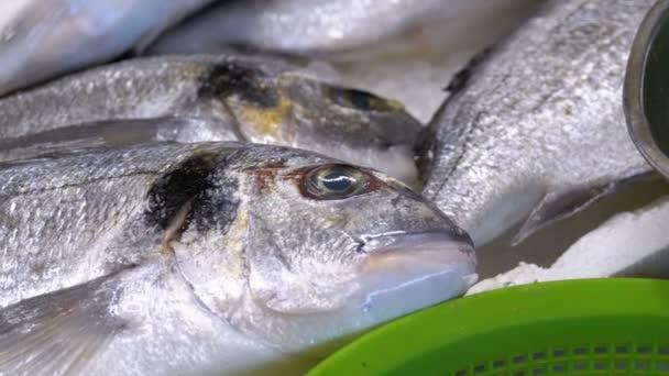 Vitrine mit frischen Meerforellenfischen im Eis auf dem Wochenmarkt