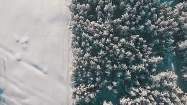 Pohled shora na zimní borovicový les a cestu sněhu za slunečného dne. Létání nad zasněženými vrcholky stromů. Panoramatický pohled z dron na sněhem pokryté vrcholky stromů