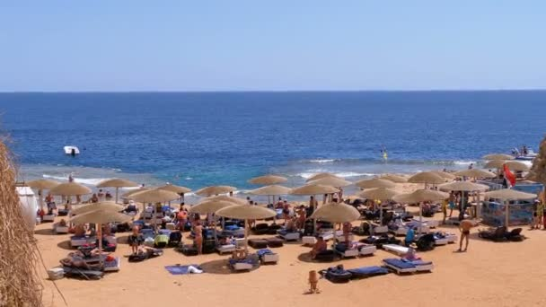 Rocky Beach with Umbrellas and Sunbeds in Egypt on Red Sea