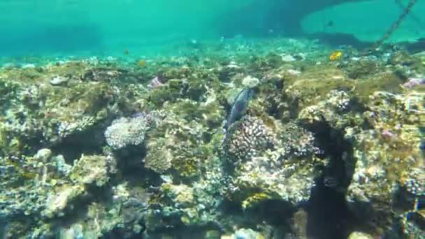 Mrtvý korálový útes s pestrými tropickými rybami v Rudém moři. Egypt.