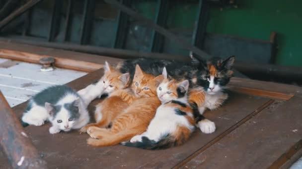 Obdachlose Wildkätzchen und stillende Katze liegen auf der Straße auf Müll