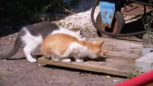Homeless Wild Kittens Eating Meat on the Street at landfill. Feeding stray animals