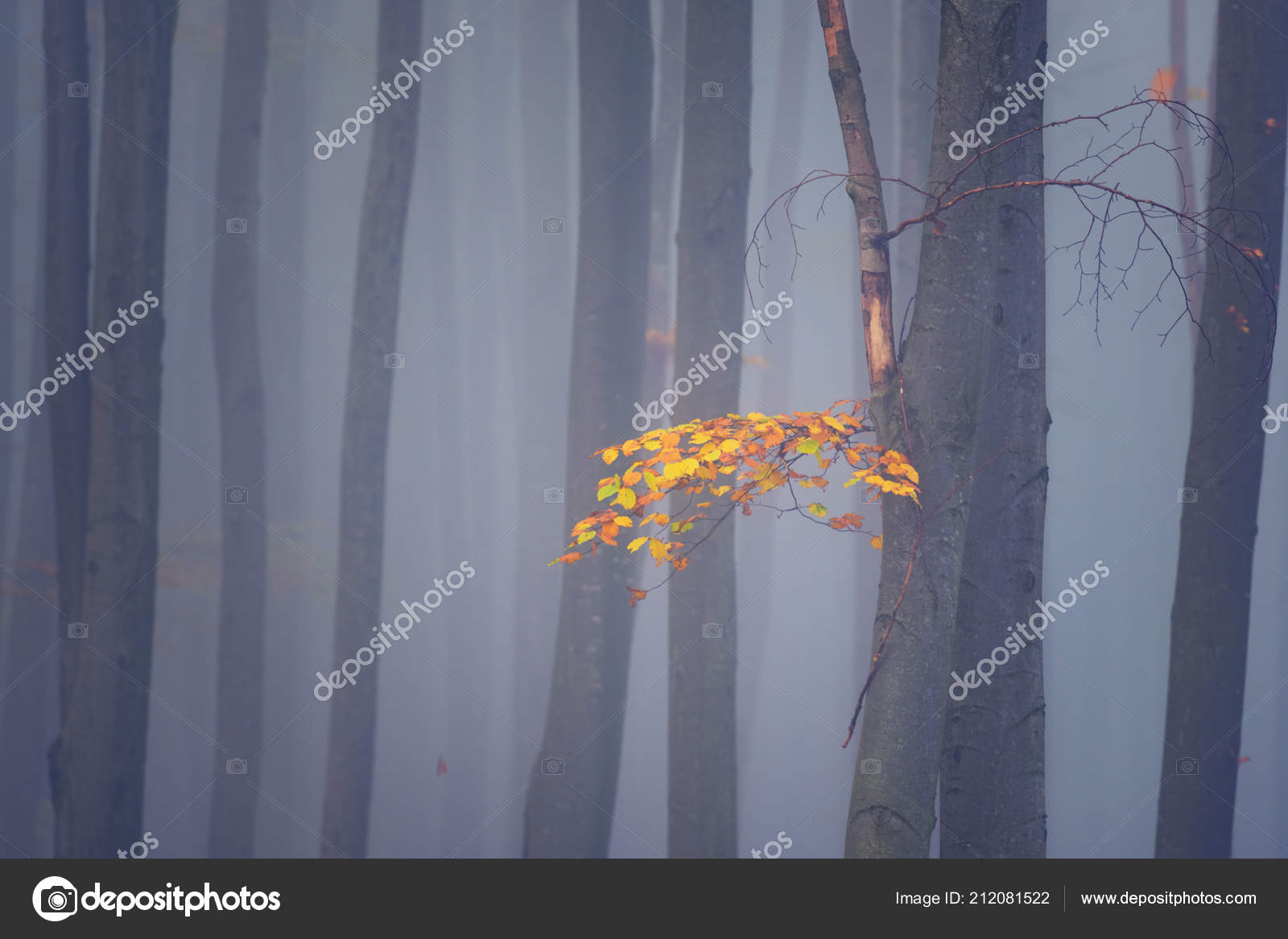 Misty Forest Wallpaper Autumn Misty Forest Abstract