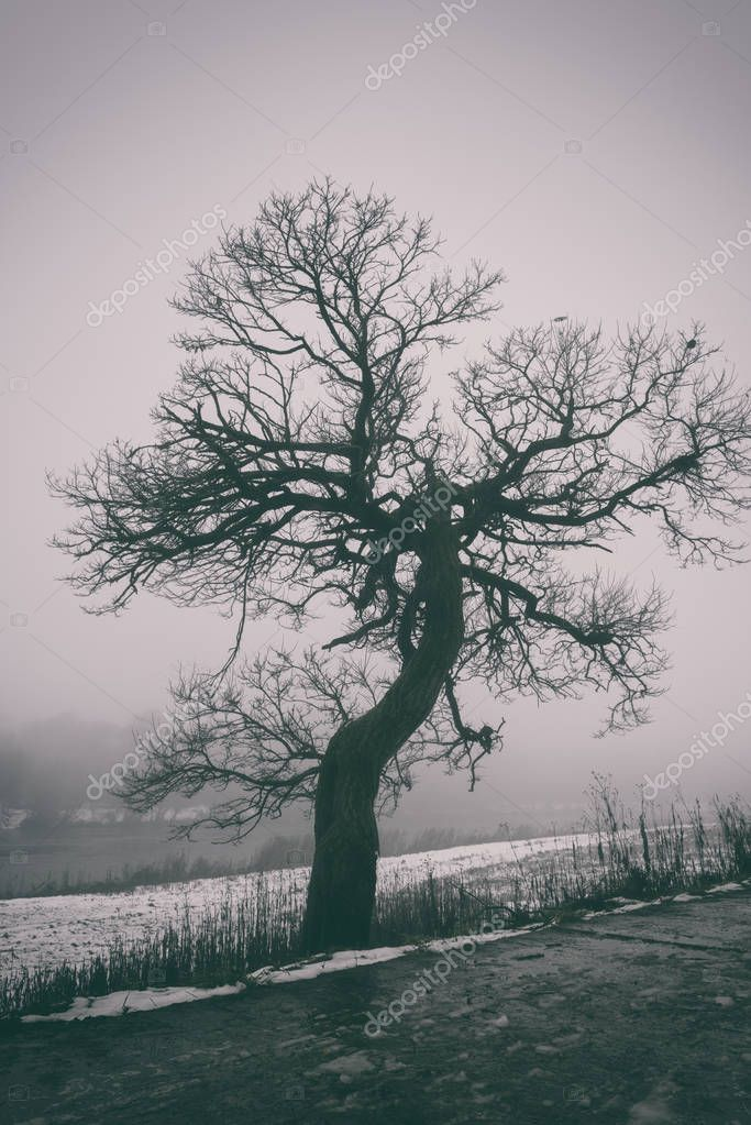 Bizarre tree in dense fog, beautiful misty background, vertical image