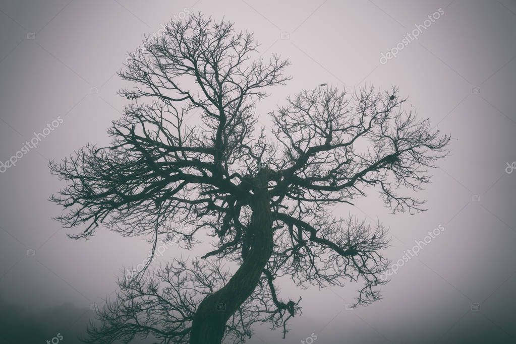 Bizarre tree in dense fog, beautiful misty background