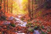 Krásné slunné barvy podzimní les s datového proudu, divoké přírody, venkovní cestování pozadí, turistické trasy v Zejmarska roklina, národní park Slovenský ráj (Slovensky Raj), Slovensko (Slovensko)