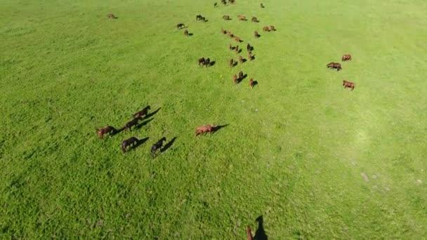 pasoucí se koně na hřišti