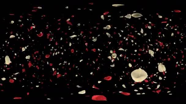 360 Vr romantikus repülő piros fehér Rózsa virág szirmai Szent Valentin-nap, esküvői évfordulója üdvözlőlapok, pályázati vagy születésnapi képeslap. Varrat nélküli hurok 4k alfa csatorna elszigetelt