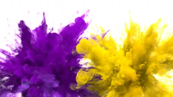 Purple Yellow Color Burst - Multiple colorful smoke explosions fluid alpha matte