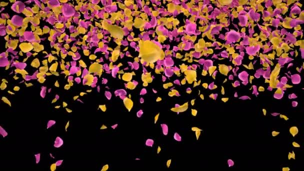 Flying Romantic Yellow pink Rose Flower Petals Falling Alpha Channel transition