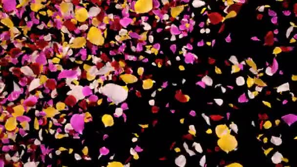 Repülő romantikus élénk színes Rózsa virág szirmok Falling Alpha átmenet