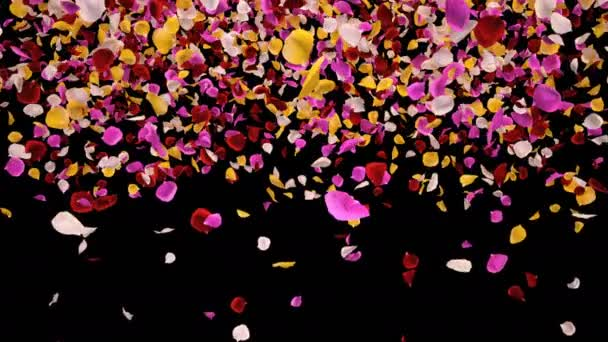 Flying Romantic vibrant colorful Rose Flower Petals Falling Alpha transition