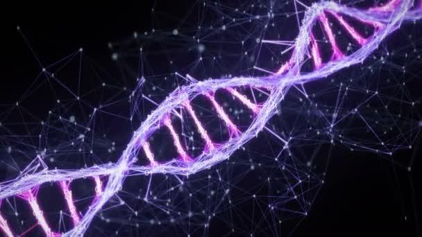 Motion Background binary Digital Plexus DNA strand 4k Loop pink purple violet