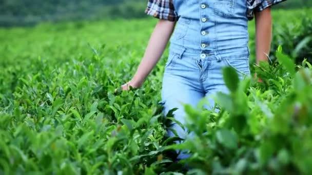 Una ragazza passeggiata o giocare in azienda agricola del tè, fuoco selettivo, rallegrare, fresco