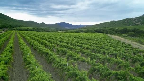 Italská krajina krásné farmy a vinice krásný letecký výhled. Krajina Itálie, farmář pracovní vinice zemědělská půda. Zemědělské plantáže vinné vinice Itálie. Video o vzdušné vinici