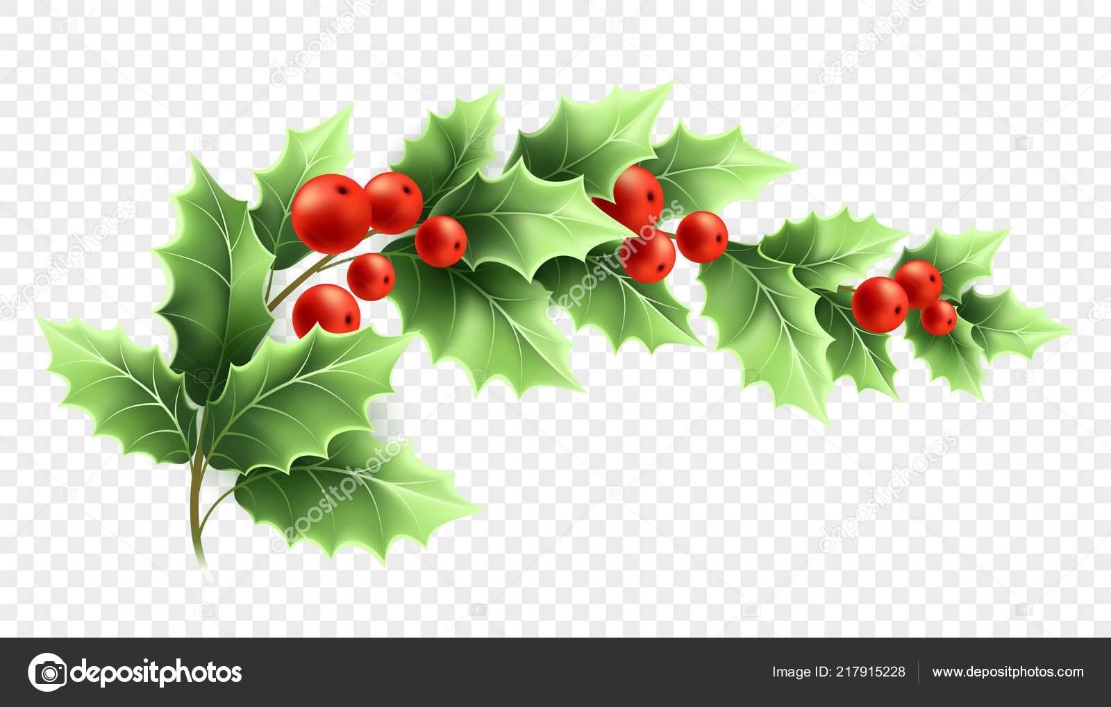 Illustration Réaliste Du Branche Houx Noël Image