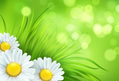 Frash Spring green grass and chamomile background. Vector illustration