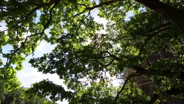 Odrůda korun stromů v lese na jaře proti modré obloze se sluncem. Spodní pohled na stromy. Jarní zpěv ptáků, Slavík, ptačího zpěvu
