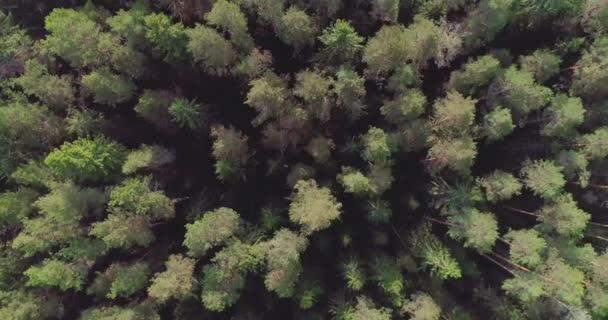 4k felülnézet forgatható és emelése a légi erdő felett