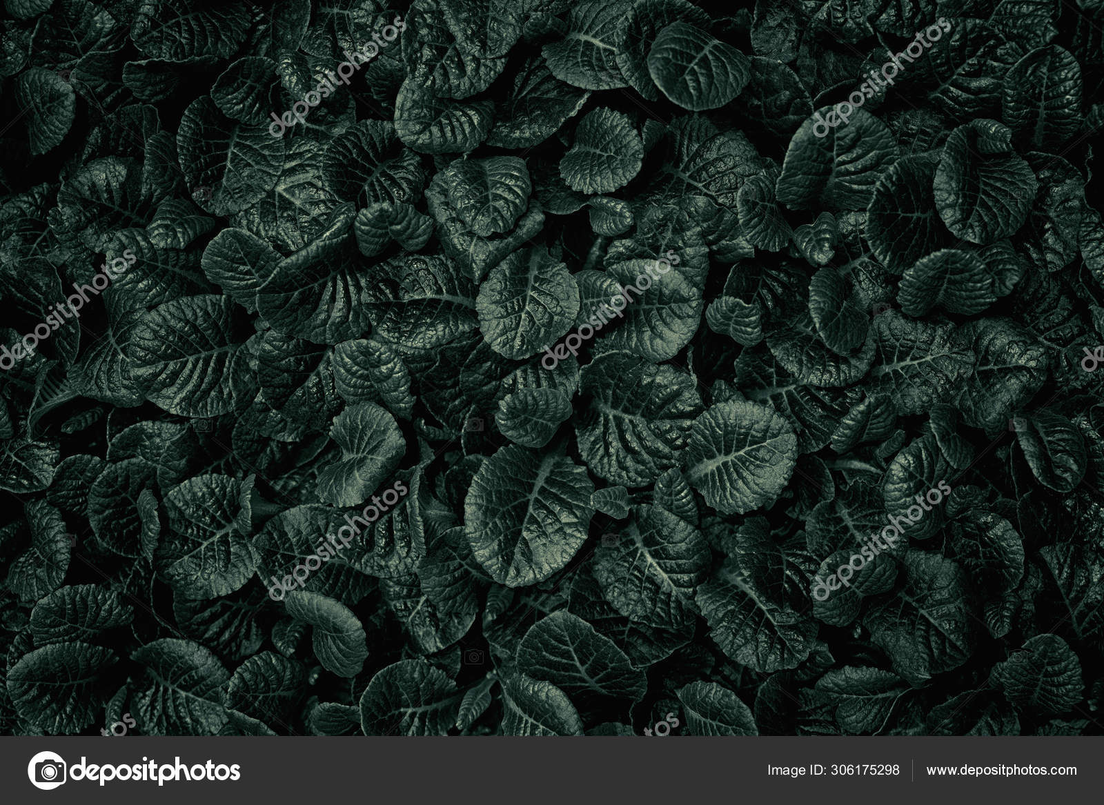 Dark Deep Green Leaves Texture Background Natural Background