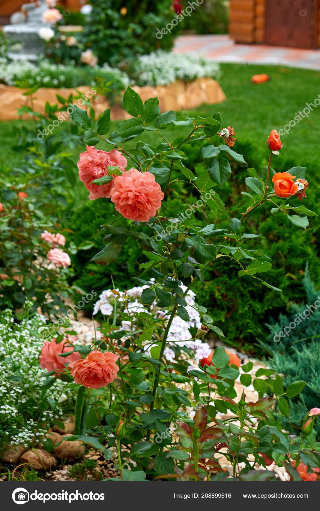 Landschaftsgestaltung Blumen Garten Blumen Im Garten Nach Regen