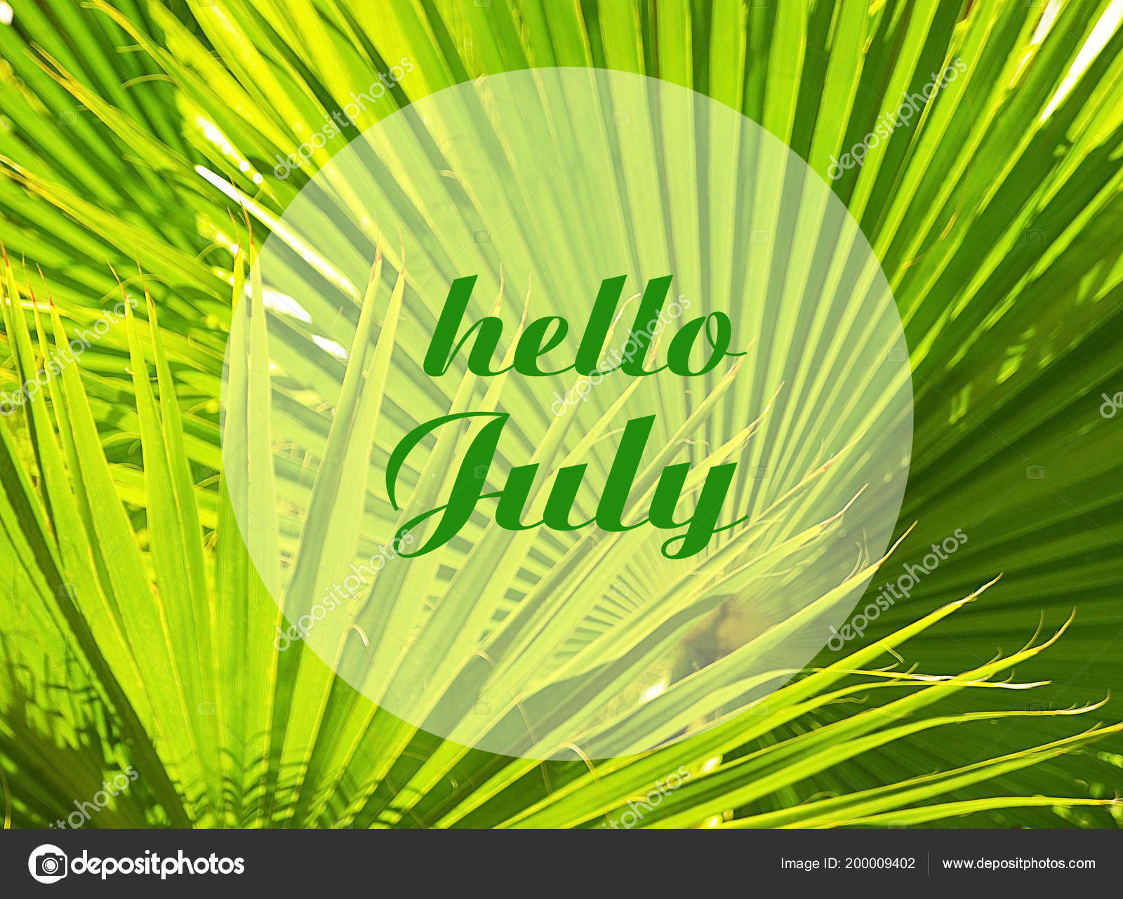 Hello July Welcoming Card Text Natural Green Tropical Palm Tree U2014 Stock  Photo