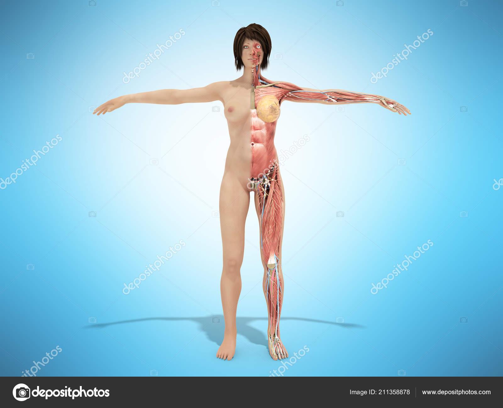Female Nude Body Anatomy Books Illustration Blue — Stock Photo