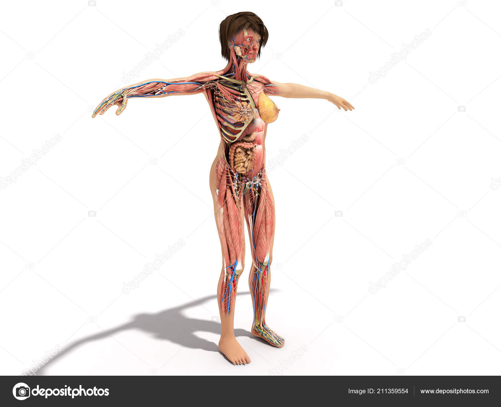 Female Layer Body Anatomy Books Ilustration White — Stock