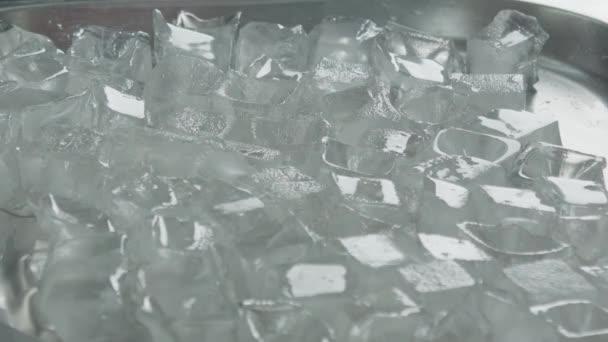 Část ryb připadá na kostky ledu