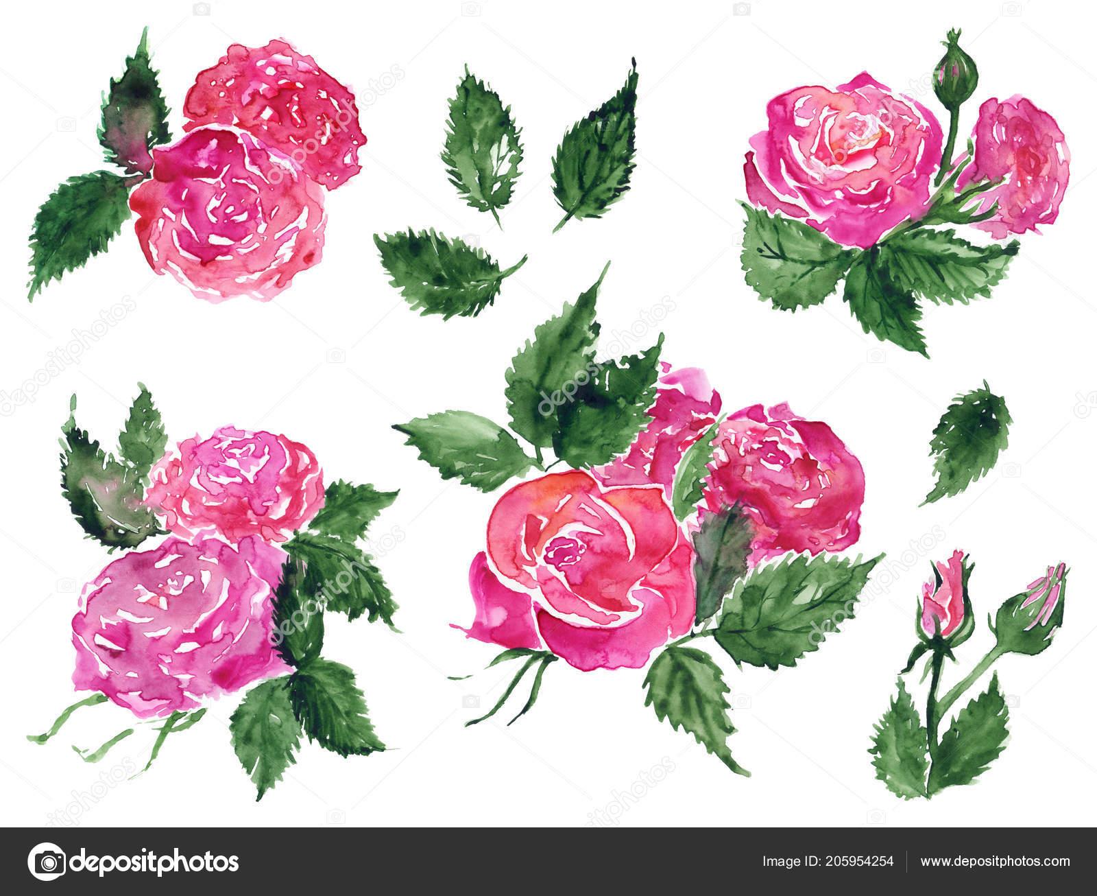 Sulu Boya Pembe Kırmızı Gül çiçek Yeşil Yaprak Bitki Elle Stok