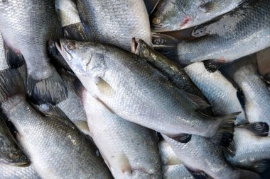 Seabass, cooked several ways and is delicious sold in the market mornings, Songkhla province Thailand country of healthy foods