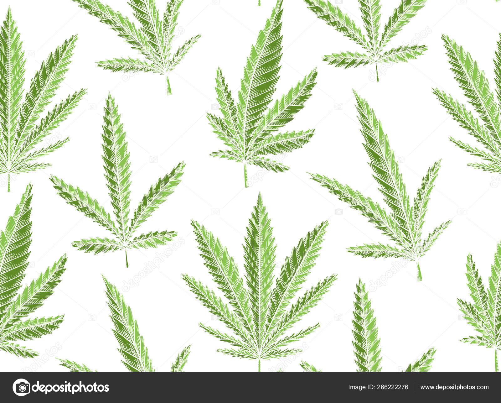 Seamless Texture Green Leaves Marijuana White Background Vector