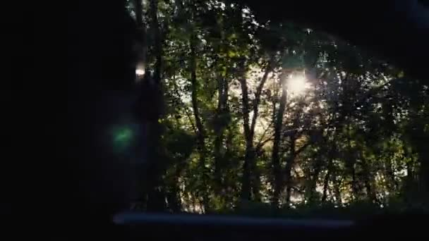 Spring forest landscape, from the side window of a car while driving. Slow-motion video of nature