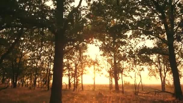 Západ slunce v dubovém lese. Podzimní les při západu slunce. Video v pohybu