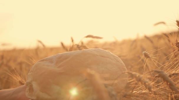 Közeli kép a női kéz a naplemente, a háttérben a búzamező fehér forró kenyérrel. A naplemente és friss kenyér búza Spikelets