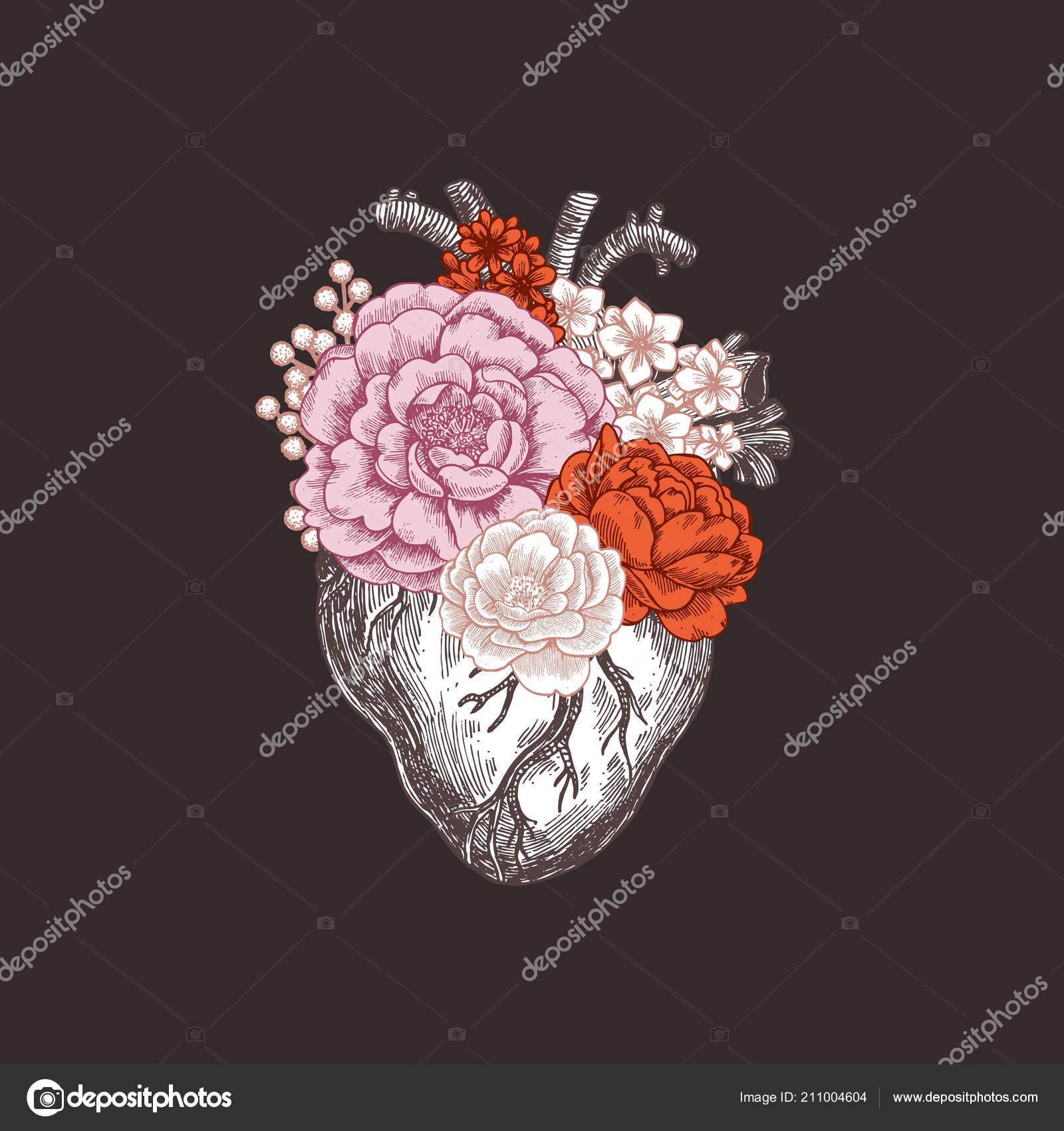 Tatuaje Vintage Ilustración De Anatomía Floral Corazón Anatómico