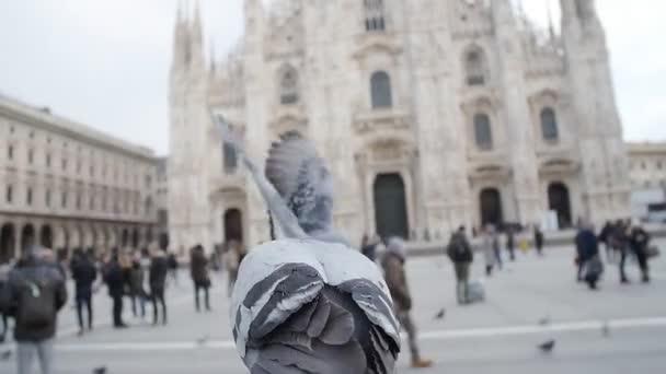 Piccioni sulla Piazza dellantico in Europa