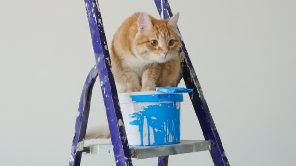 Koncepce obnovy a malby v novém bytě. Červené funny kočka sedící poblíž plechovka barvy