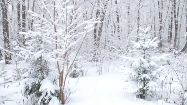 Krásný zimní zasněžený les