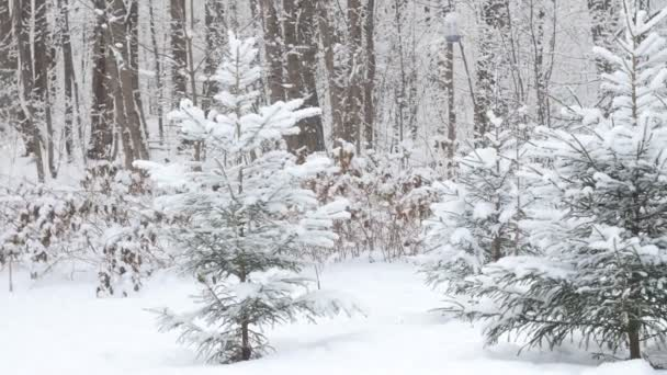 Beautiful winter snowy forest