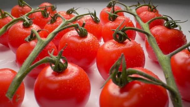 Nádherné šťavnaté rajčata na větvi