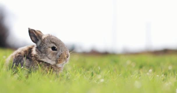 Legrační malý šedý králík sedí v zelené trávě. Velikonoční zajíček v zahradě
