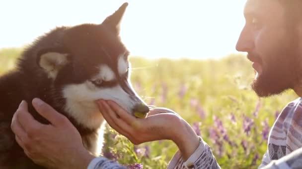 Hund frisst Futter aus den Händen des Besitzers. Wasser wird in einem dünnen Bach in die Handfläche gegossen. Zeitlupe