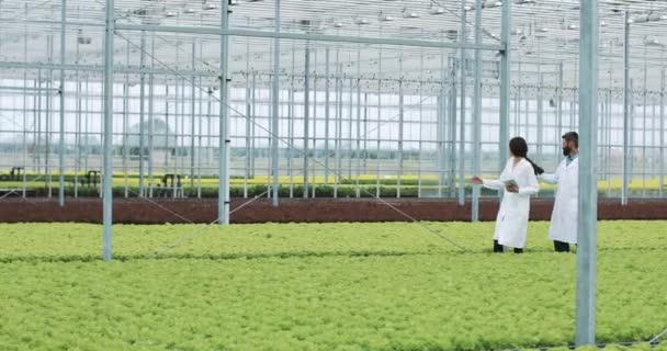 Hydroponics method of growing salad in greenhouse. Two lab assistants with tablet examine state of plants and analyze growing potential. Agricultural industry