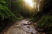 Photo Landscape with mountain river, Sucha Bela Canyon, Slovak Paradise, Slovakia