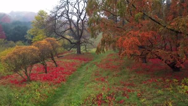 gyönyörű park ősszel