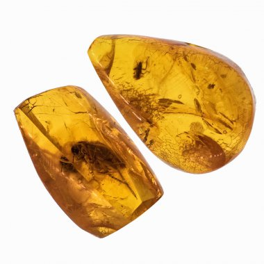 Piece of amber with insects inclusions