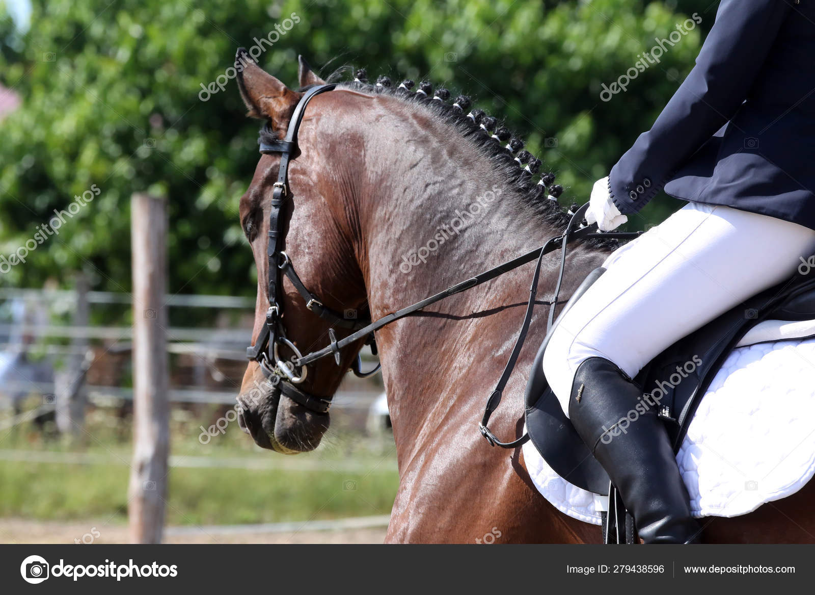 Beautiful Dressage Horse Portrait Closeup During Competition Stock Photo C Accept001 279438596