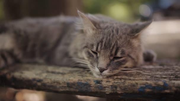 Einsame graue Katze mit langen weißen Schnurrhaaren und traurigem Blick liegt auf der Bank. Plüschkatze. Katzenporträt, keine Menschen in der Nähe. Außenaufnahmen, Nahsicht.