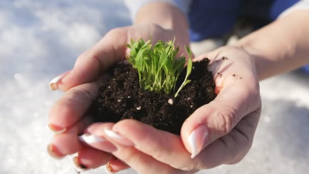 A woman holds a biological sprout of life in his labor hands with the ground for planting, on a winter snow background. Winter snow background.